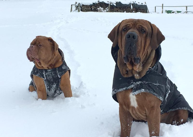 Der Hundemantel schützt den Hund im Winter vor Kälte und Frieren.